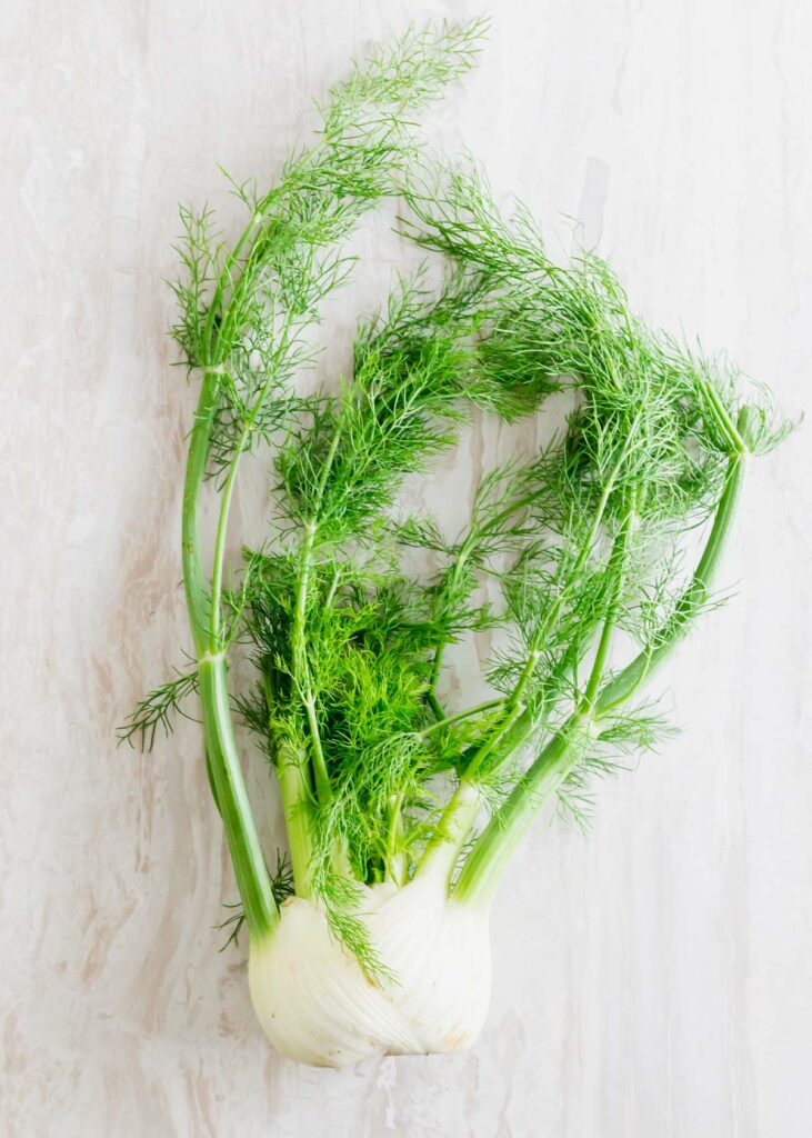 Raw fennel bulb with fronds.